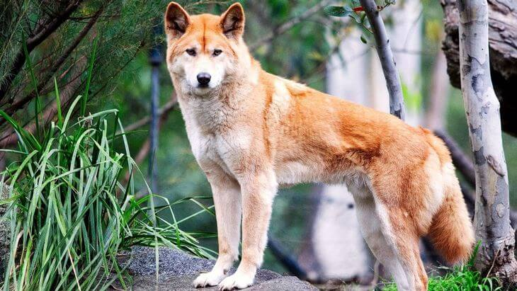 что говорится о волке в справочной литературе