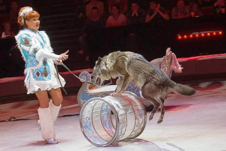 Волк в цирке