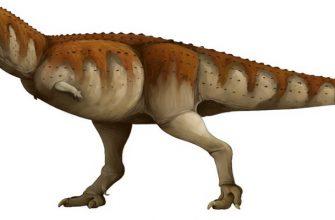 Динозавр экриксинатозавр: Как выглядит, чем питается, когда обитал