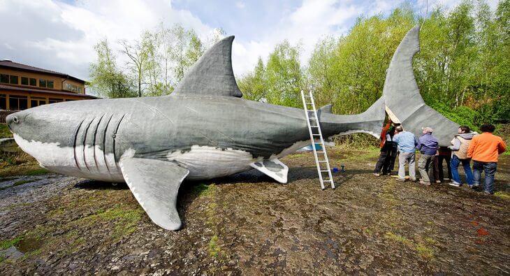 самая большая акула в мире фото мегалодон