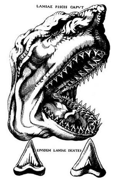 Изображение головы акулы мегалодона
