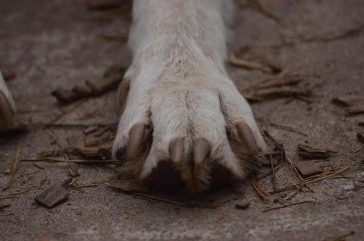 какой мех у волка