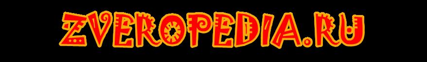 Zveropedia.ru