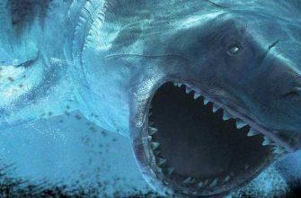 Акула Мегалодон: Кто такой, размеры и вес, где обитает, существует ли