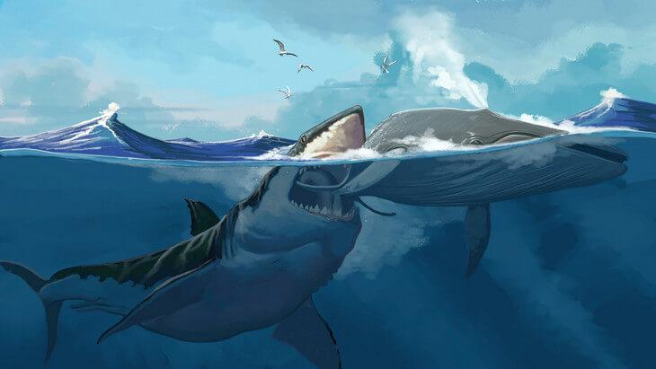 нападение мегалодона на кита