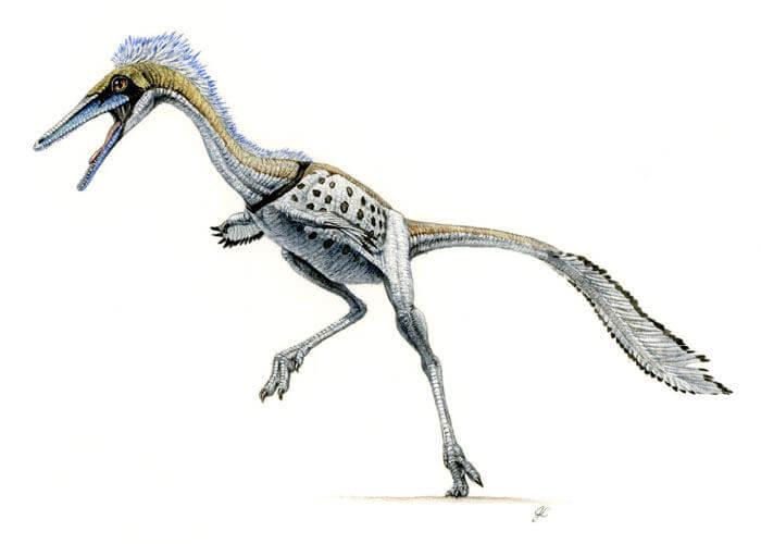 Рисунок Шувууйя