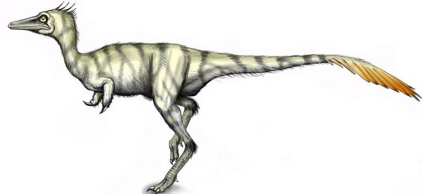 Шувууйя динозавр ⭐ Кто это, образ жизни, что ест, где обитает, враги