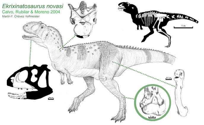 скелет экриксинатозавра