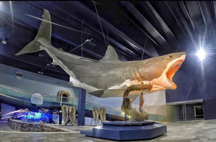 скелет мегалодона в музее