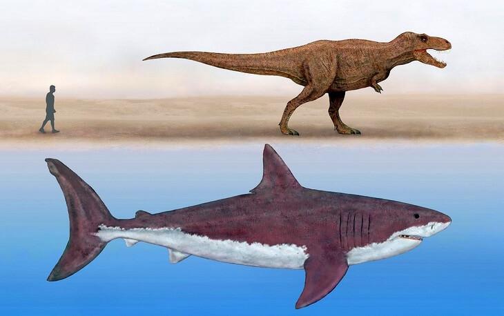 мегалодон и тираннозавр