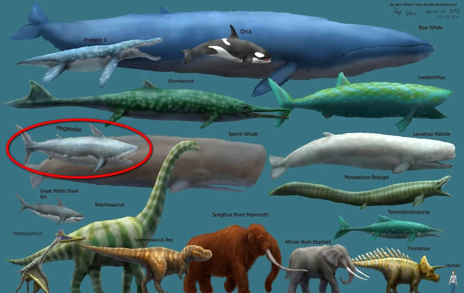 мегалодон сравнение с китом