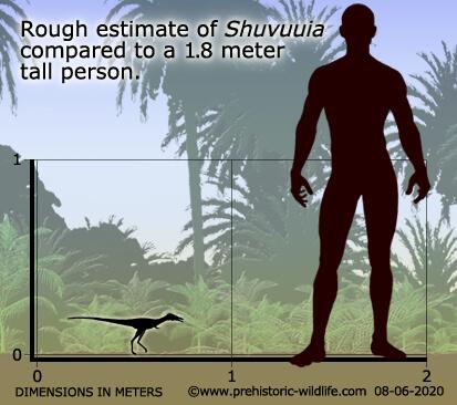 Сравнение шувуйя с человеком