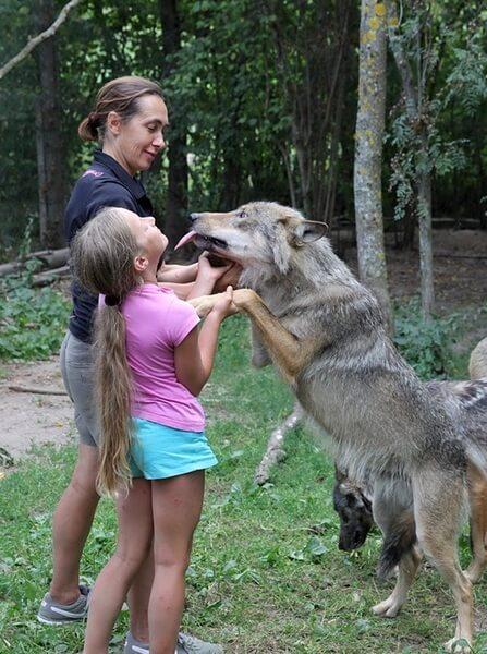 какой самый опасный волк