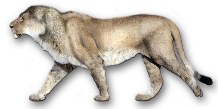 пещерный лев фото