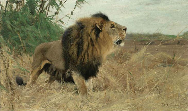 североафриканский лев