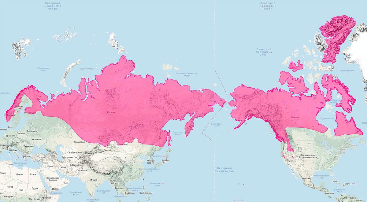 где водится росомаха в россии