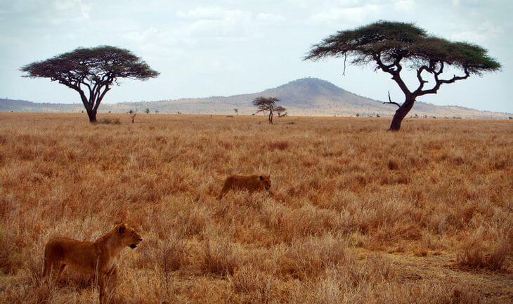 страны где живут львы