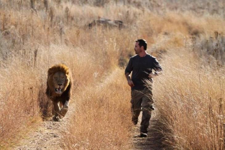 как можно защититься от льва