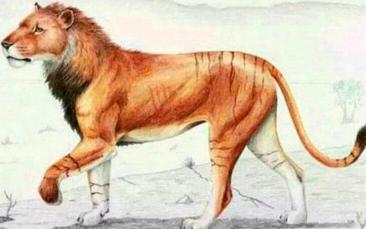 как выглядел Европейский пещерный лев