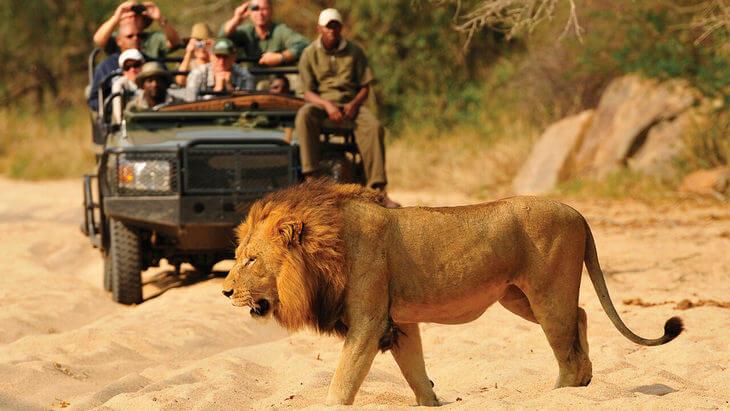 как уйти ото льва